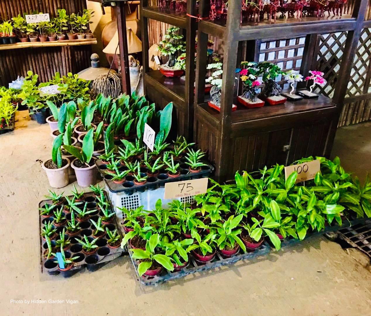 Plants for sale in Hidden Garden Vigan