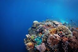 Balicasag Marine Sanctuary