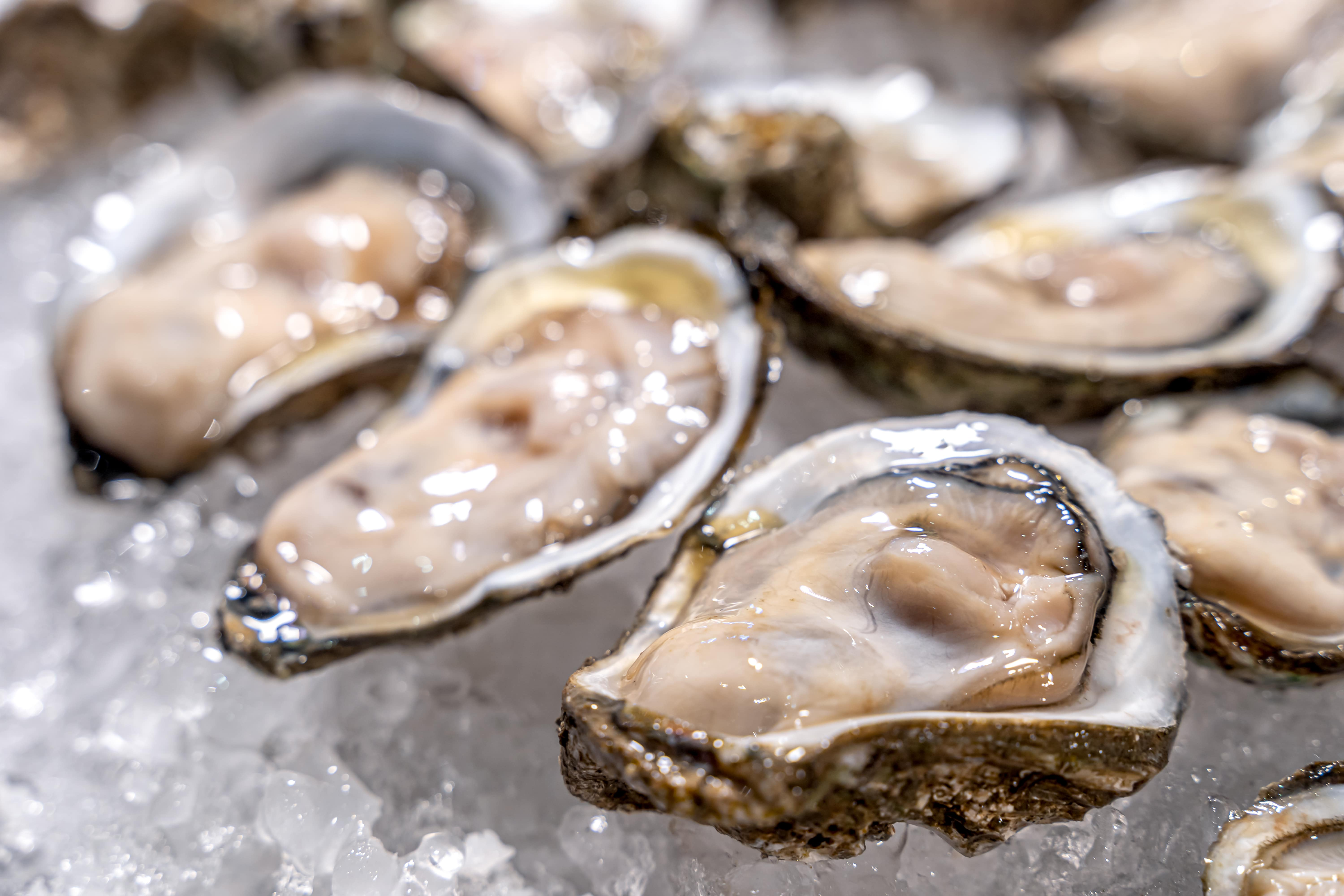 Fresh oysters served on a platter at Cambuhat Oyster Village
