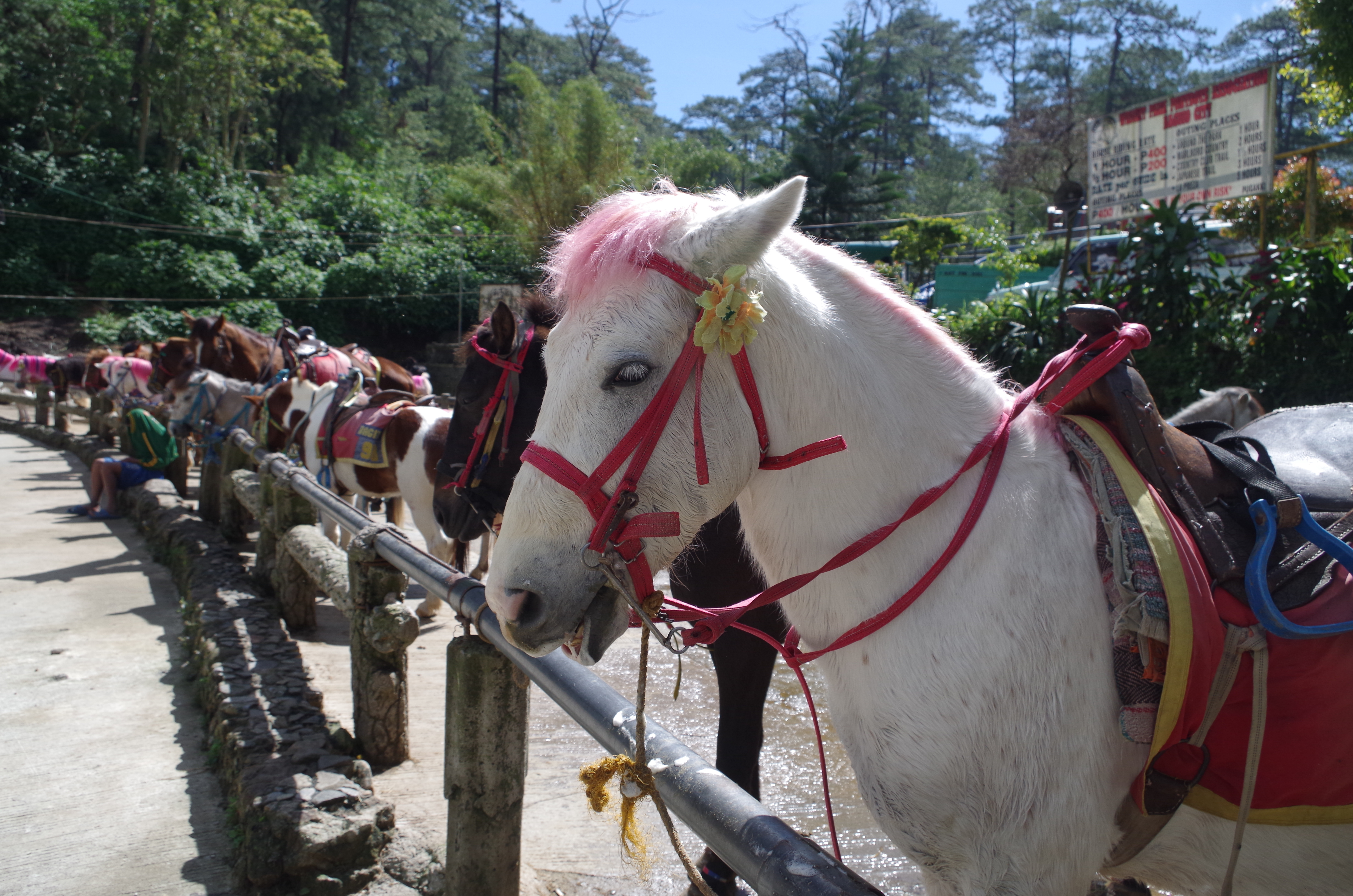 Horses lined up in Wright Park in Baguio