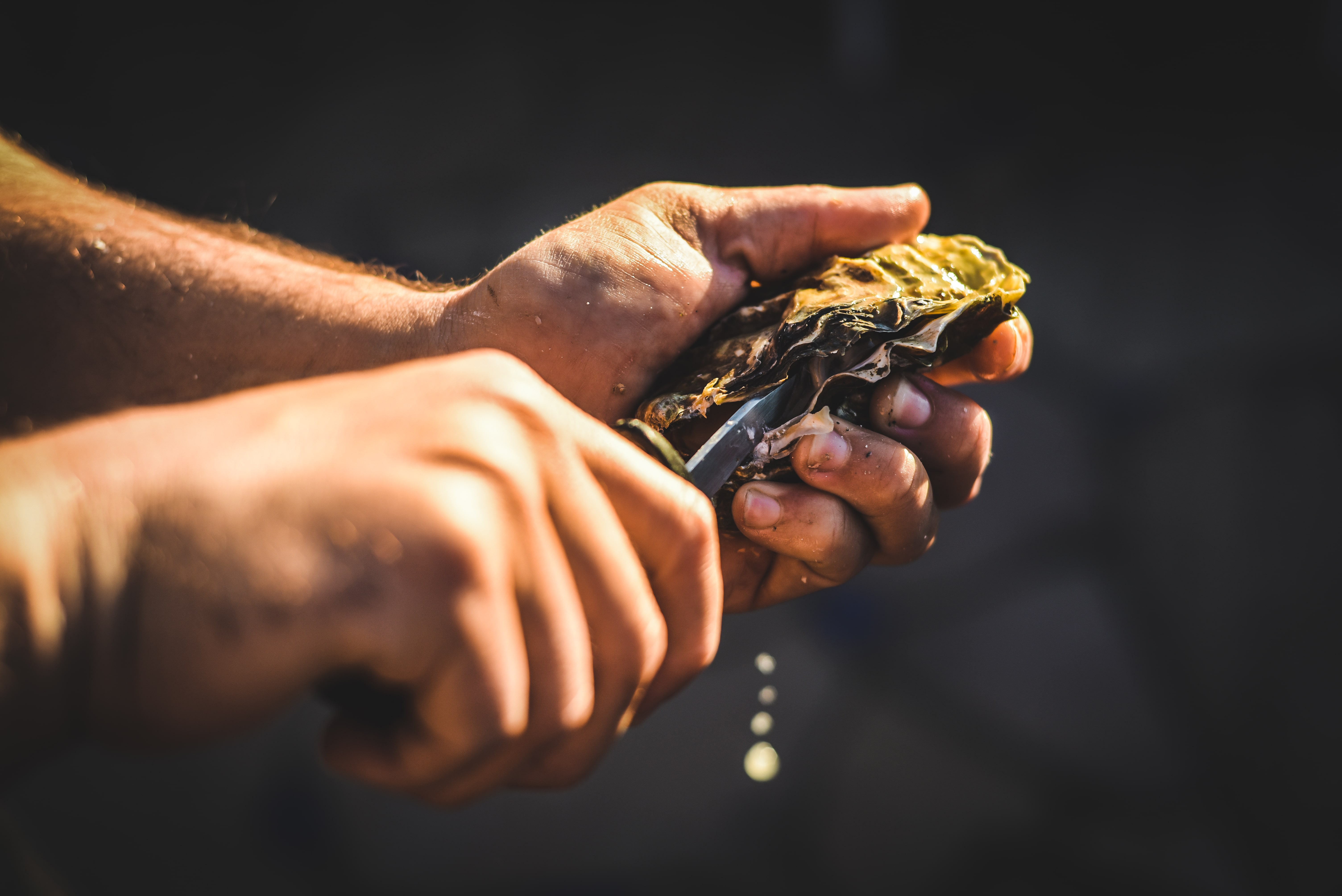 A man shucking an oyster in Cambuhat Oyster Village