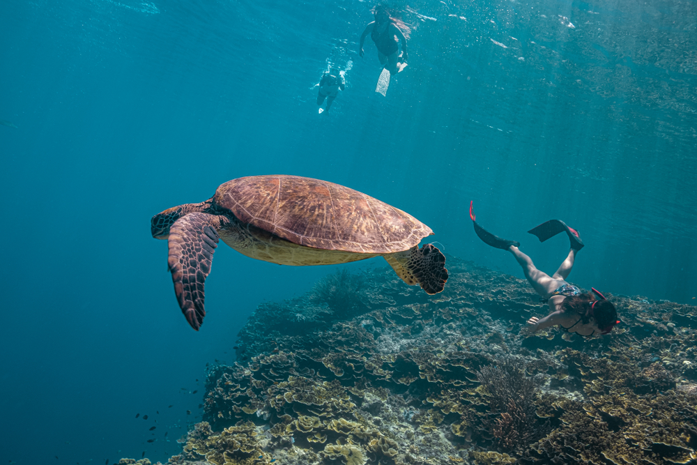 Tourists diving with sea turtles in Pescador Island