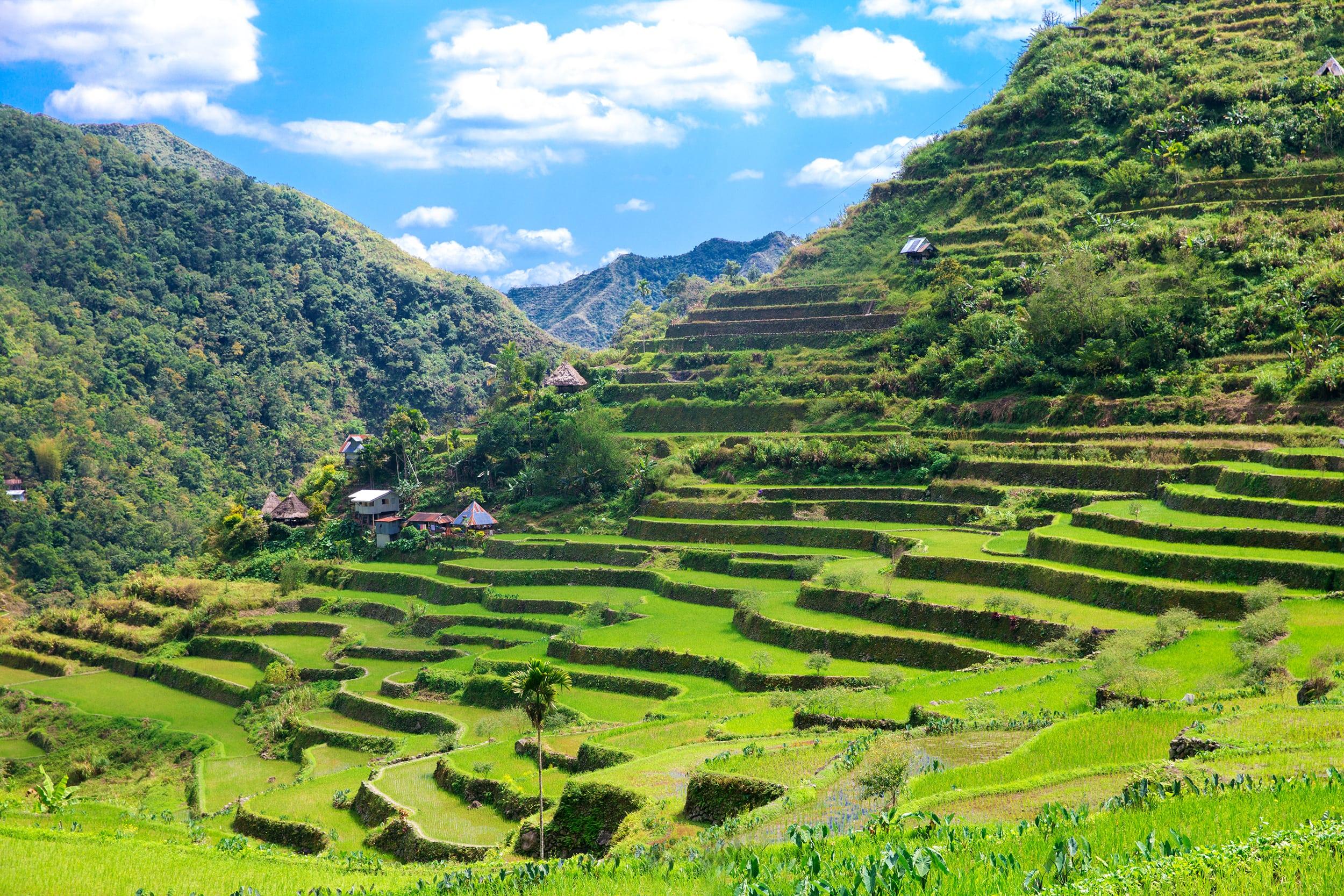 Lush green landscape of Batad Rice Terraces