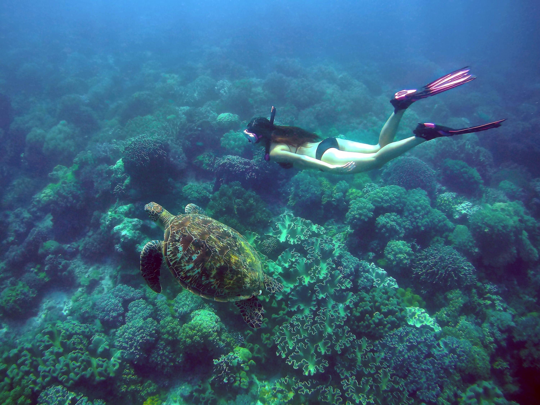 A diver swimming with a sea turtle in Apo Island