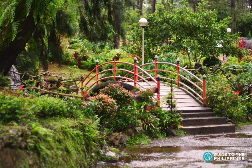 Bridge inside the Botanical Garden of Baguio City