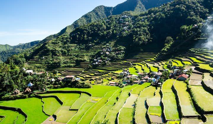 Vibrant green rice terraces in Banaue
