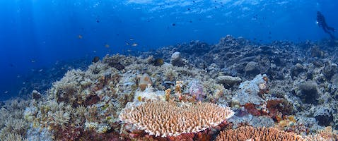 Puerto Galera Diving Courses and Packages