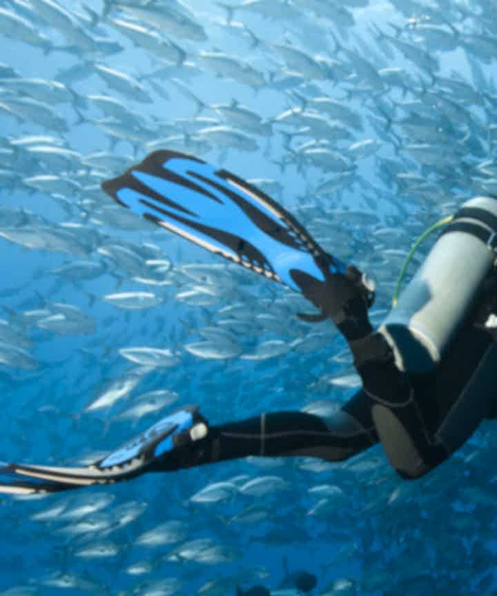 Bohol Diving Courses and Packages