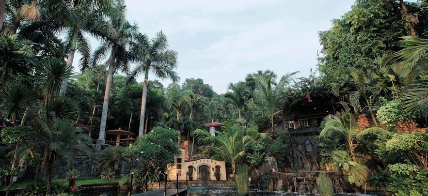 Lush forest in Cristina Villas Resort