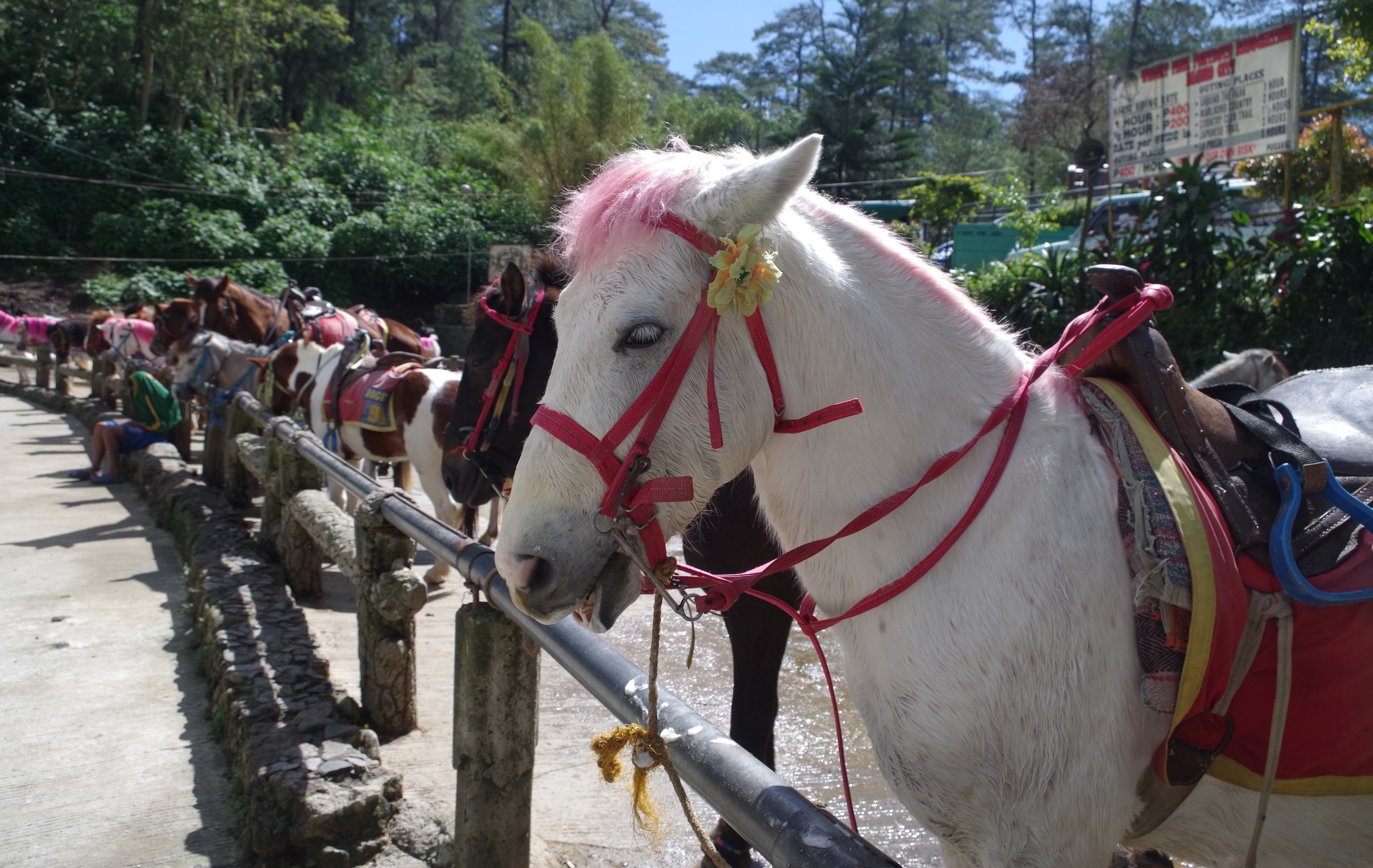 White horses at The Wright Park in Baguio