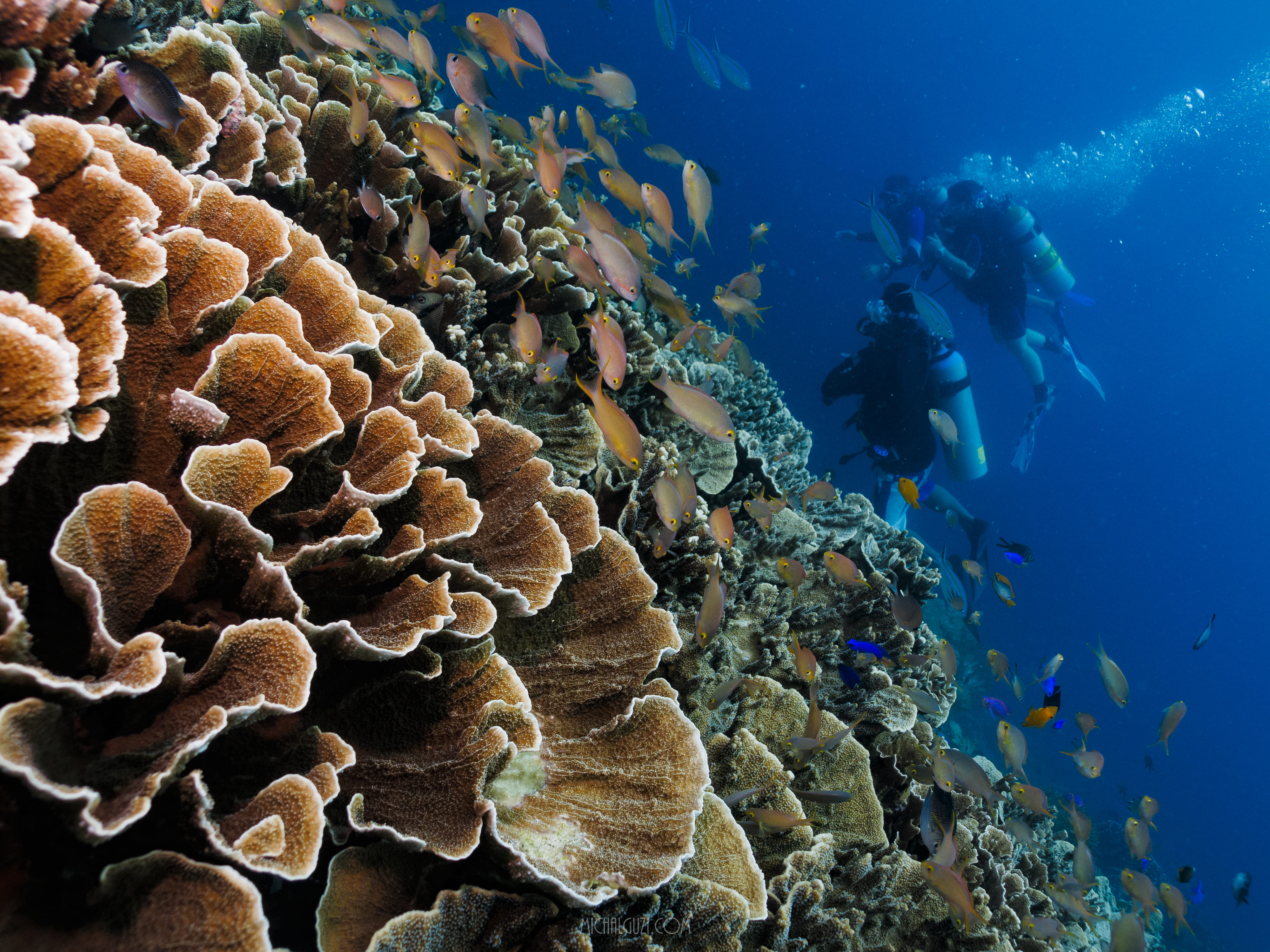 Beautiful corals and fishes at White Beach