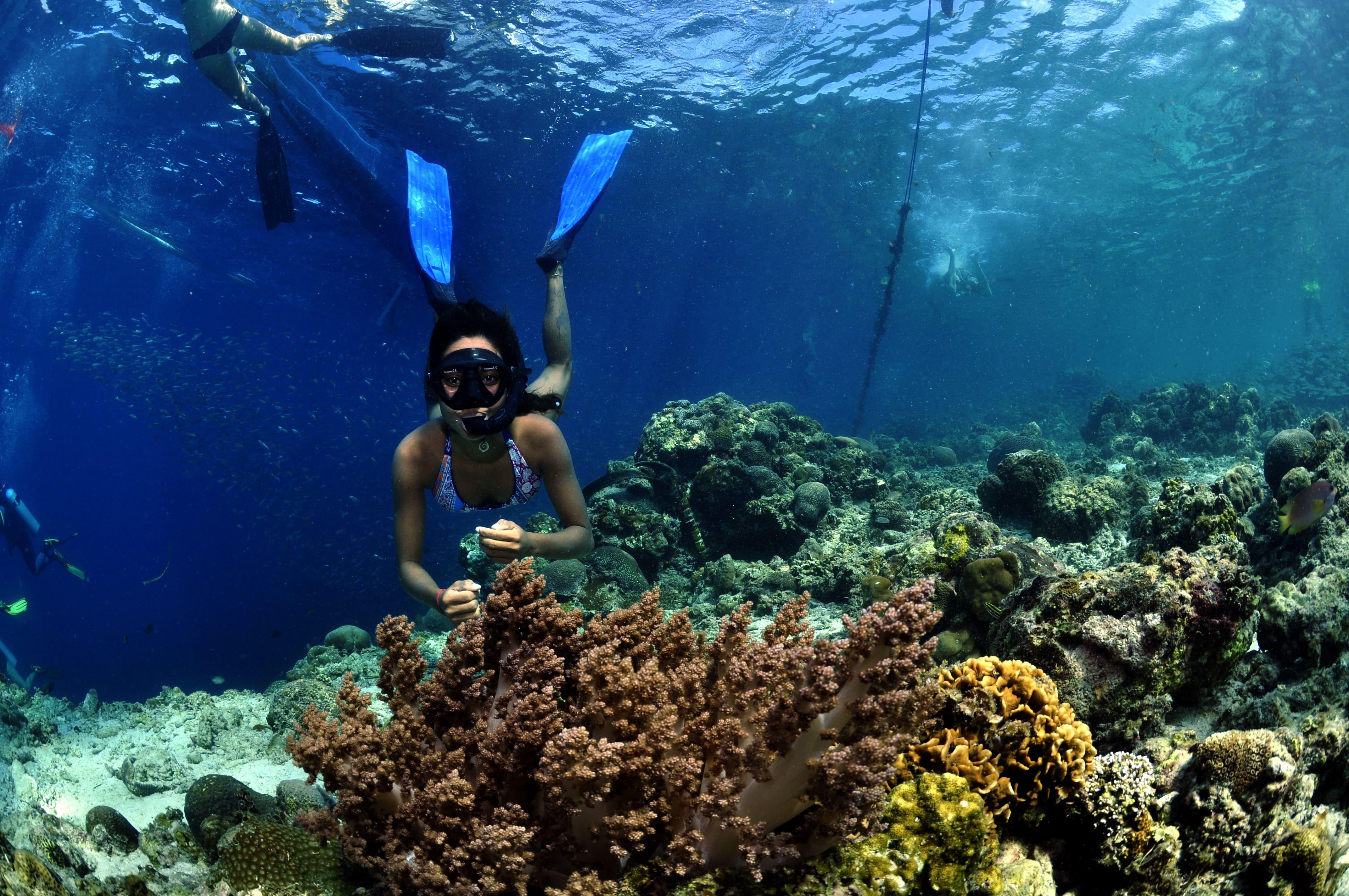 A diver during a fun dive session in Cebu