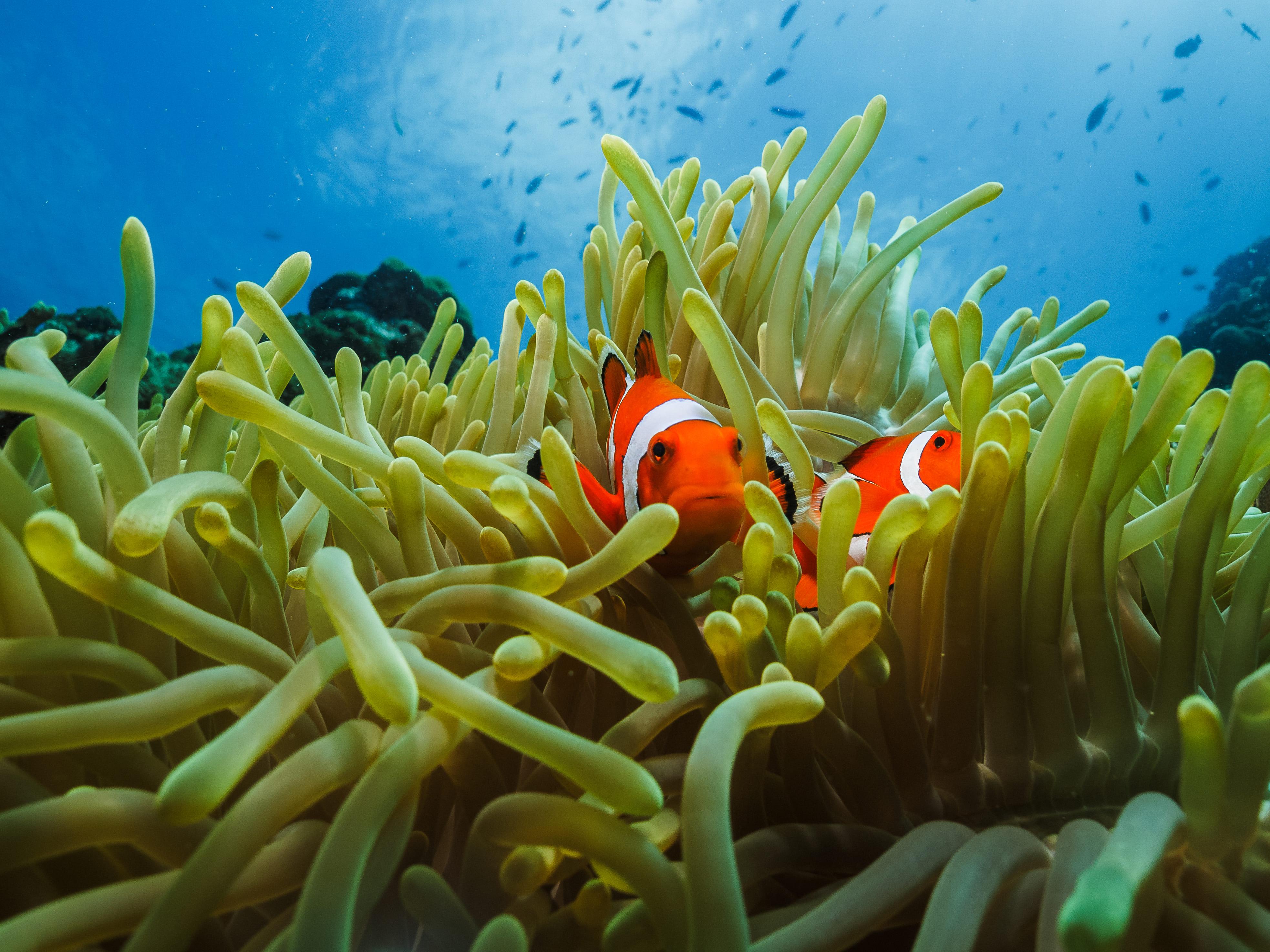 Colorful marine life in Cebu