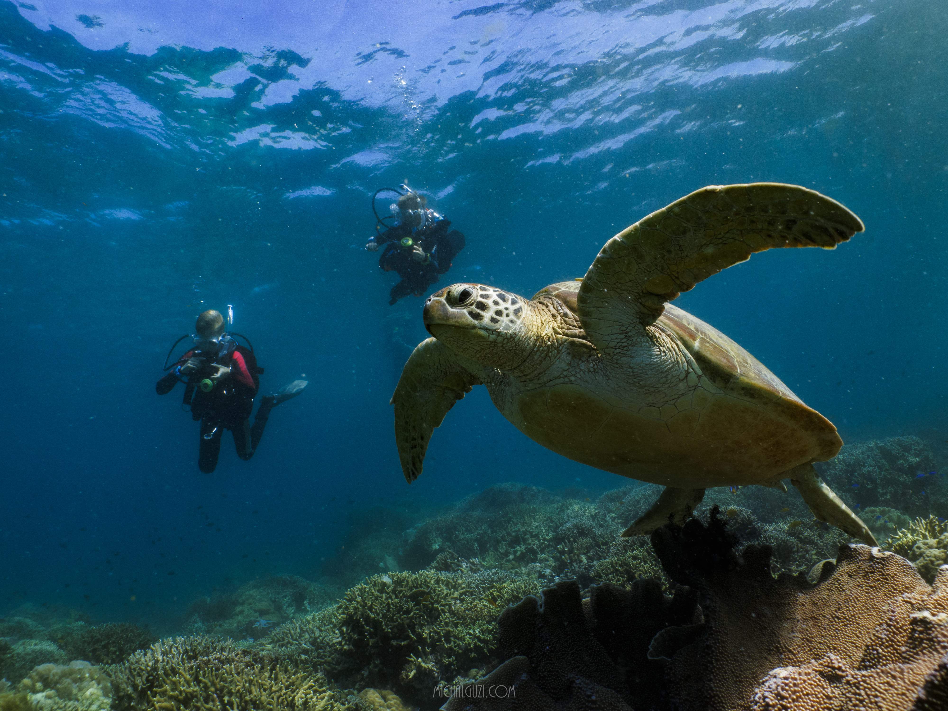 A sea turtle as seen during a diving session in Cebu