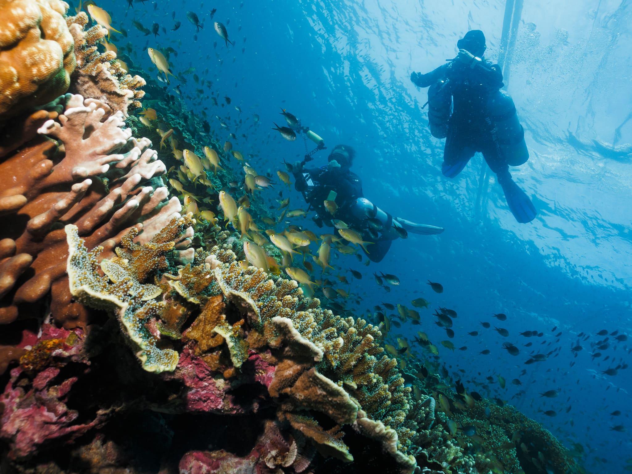 Beautiful corals at Ronda Bay Marine Sanctuary