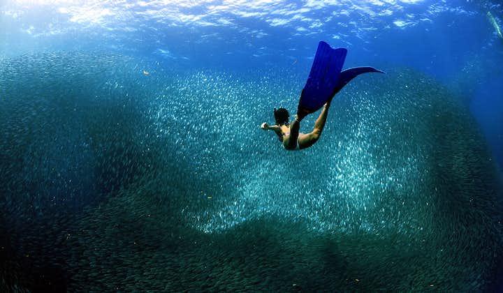 A woman going to the sardine run in a dive spot in Cebu