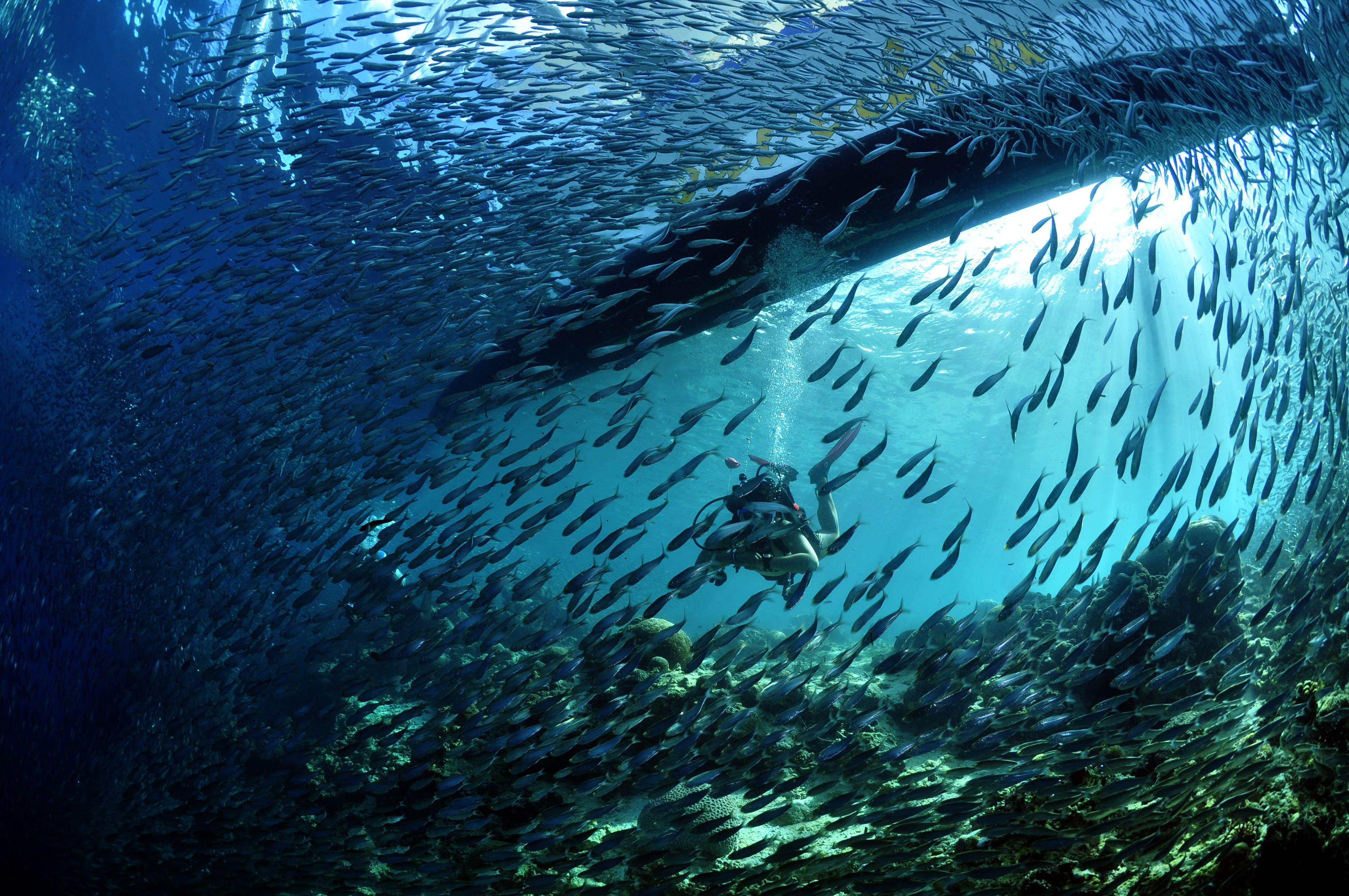 A school of fish in a dive spot in Cebu