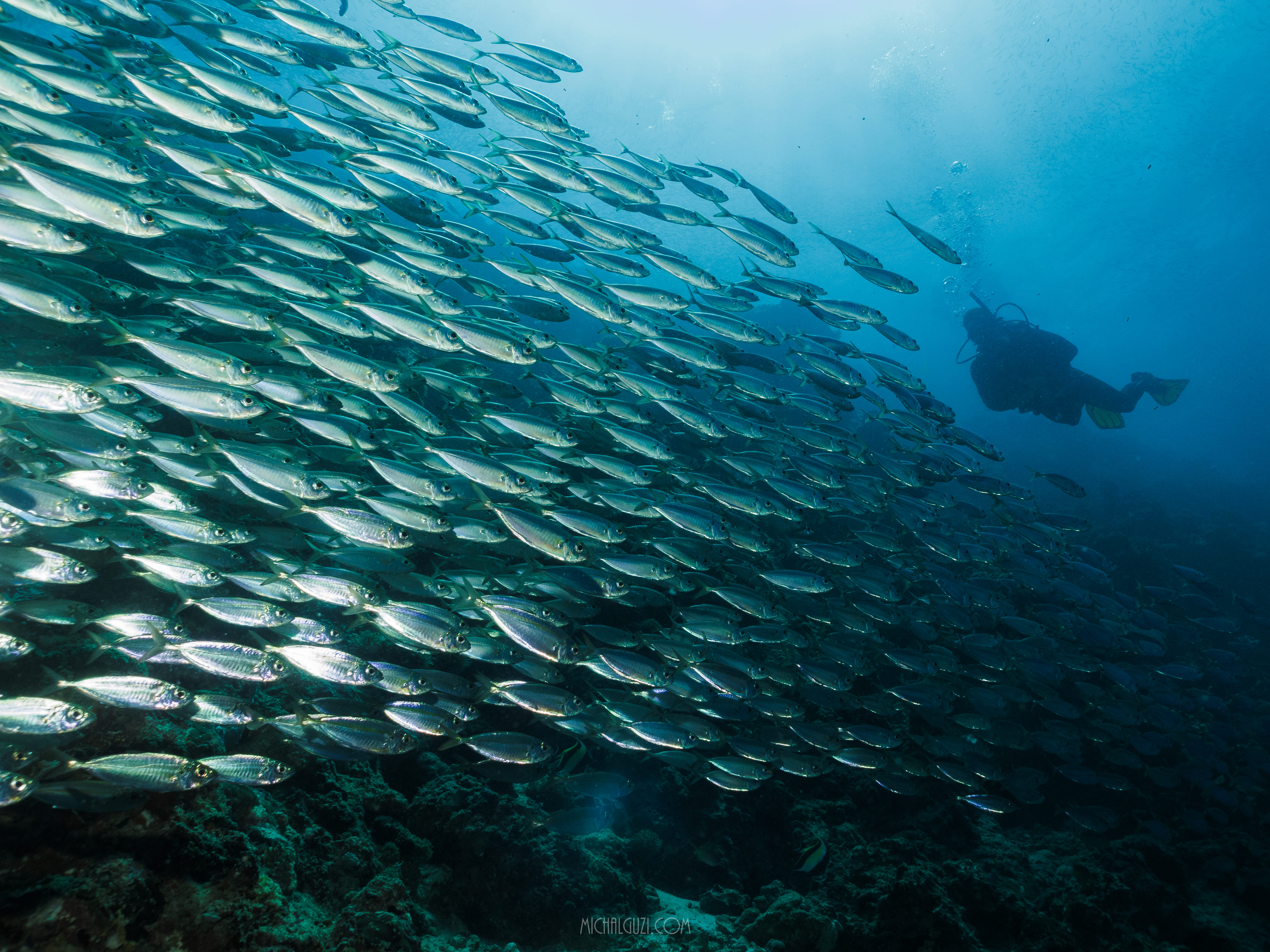 Sardine run experience in Moalboal