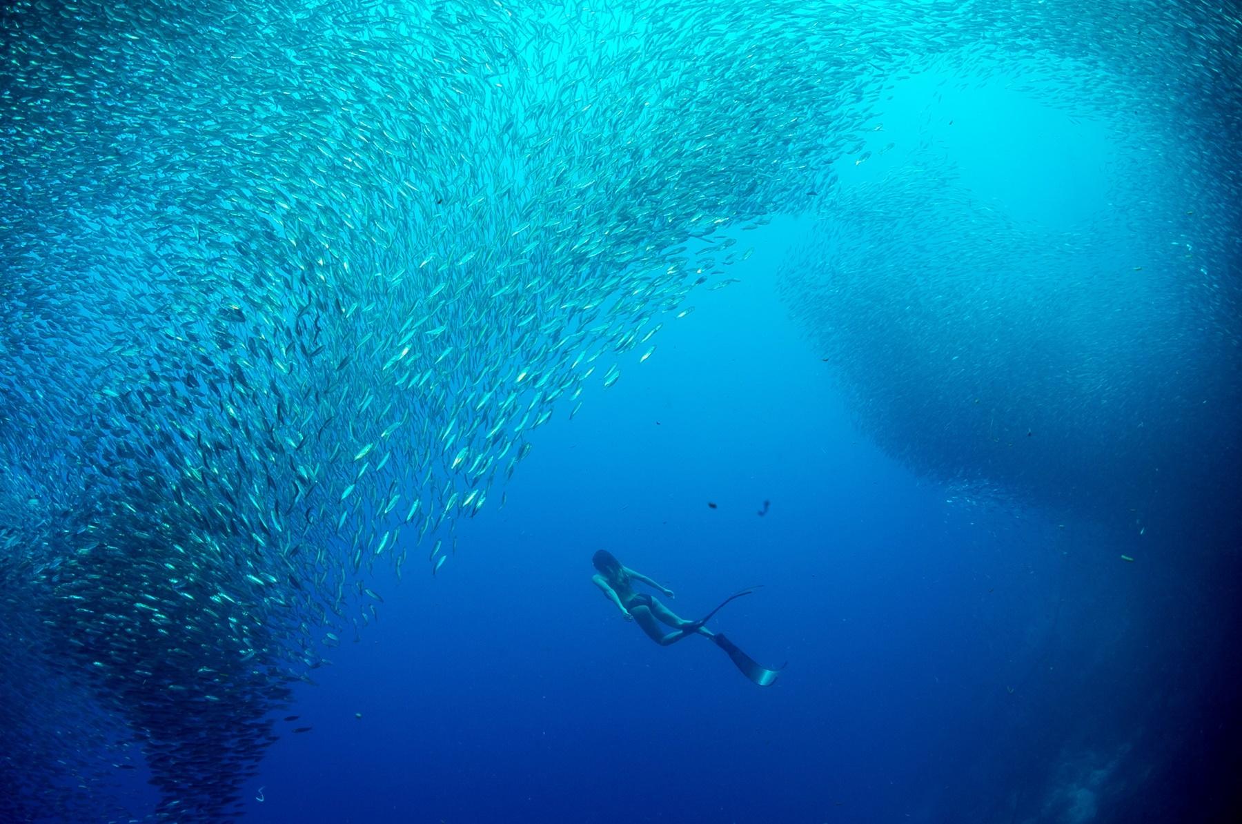 Sardine run in Moalboal Cebu
