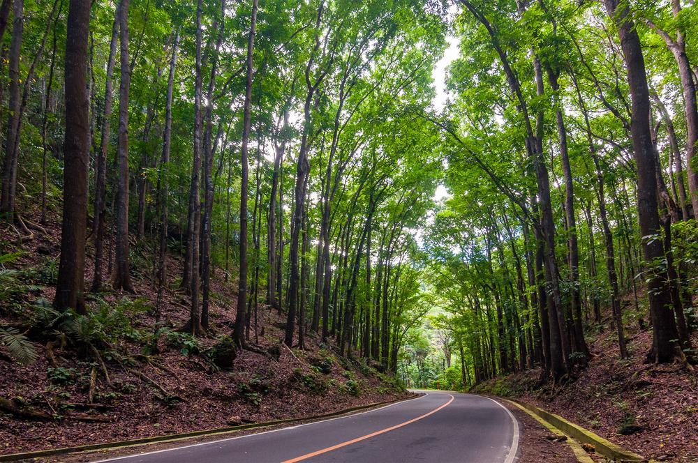 Bilar Manmade forest in Bohol