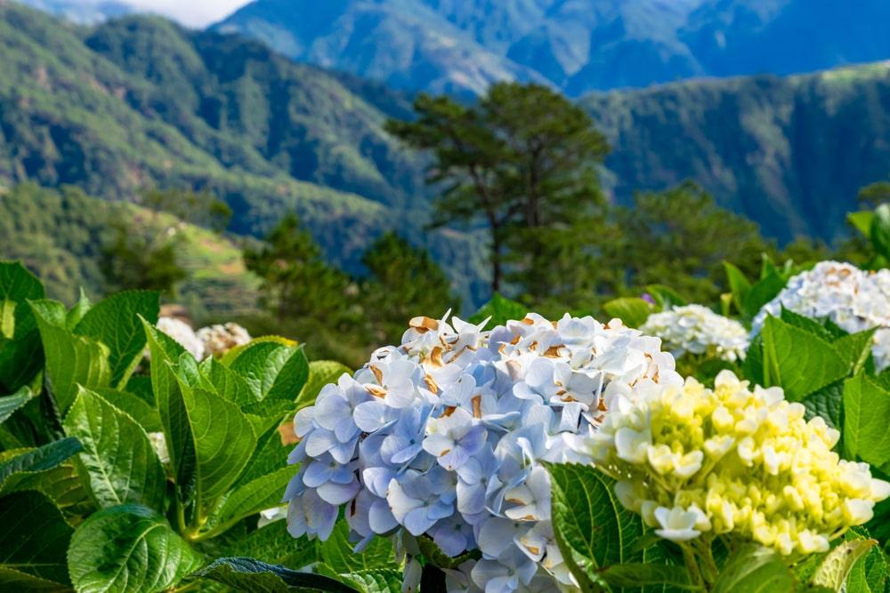 Northern Blossom Flower Farm in Benguet