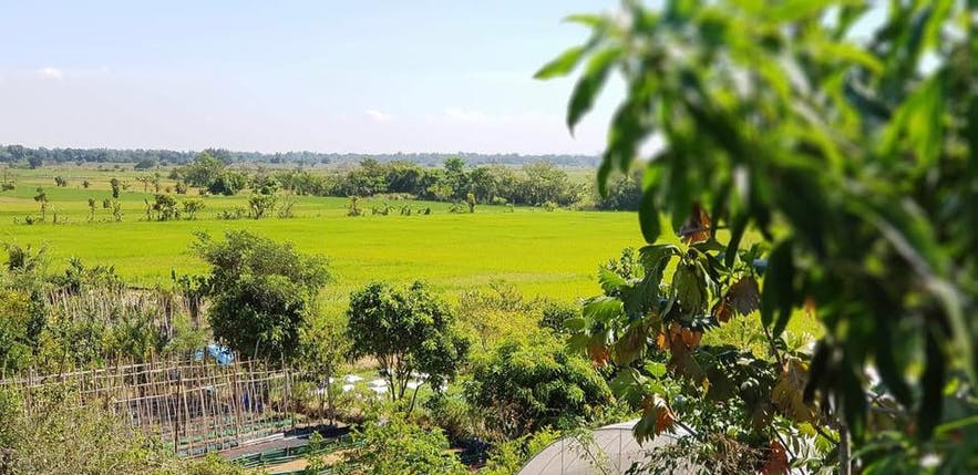 View of the crops in Our Farm Republic, Pangasinan