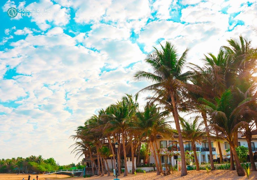 Palm trees lining Bolinao Beach, Pangasinan