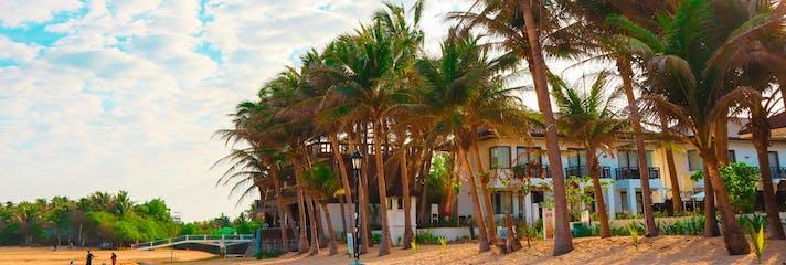 Palm trees lining Bolinao Beach, Pangasinan - Copy.jpg