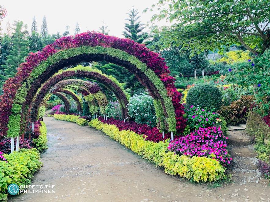 Flower arch path in the Buwakan ni Alejandra, Cebu