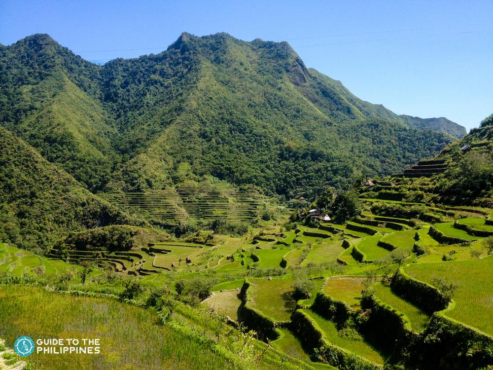 Rice terraces in Banaue