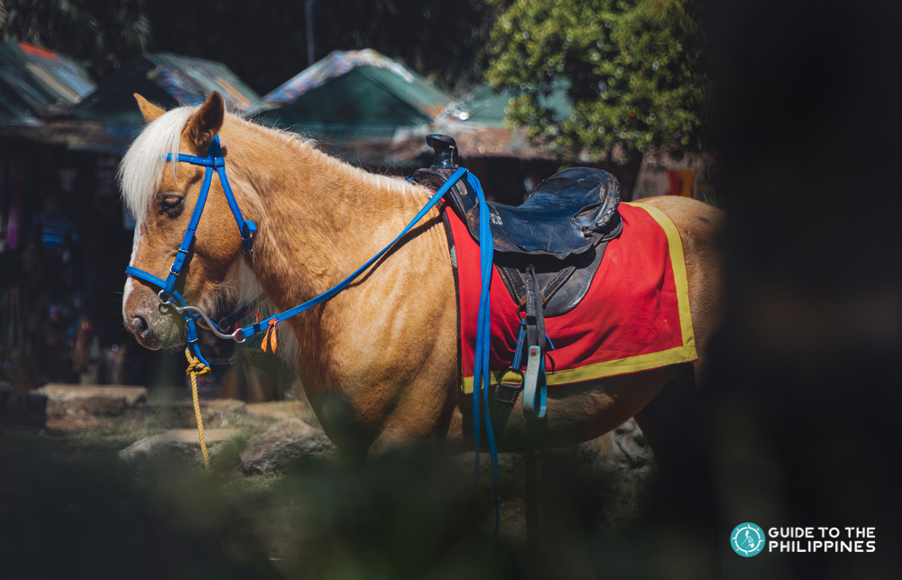A horse in wright park Baguio