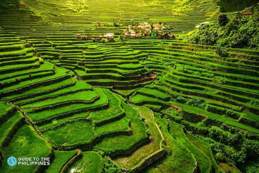 Wide shot of Banaue Rice Terraces in Batad
