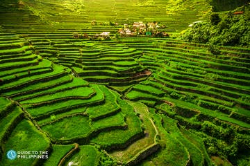 Wide shot of Banaue Rice Terraces in Batad.jpg