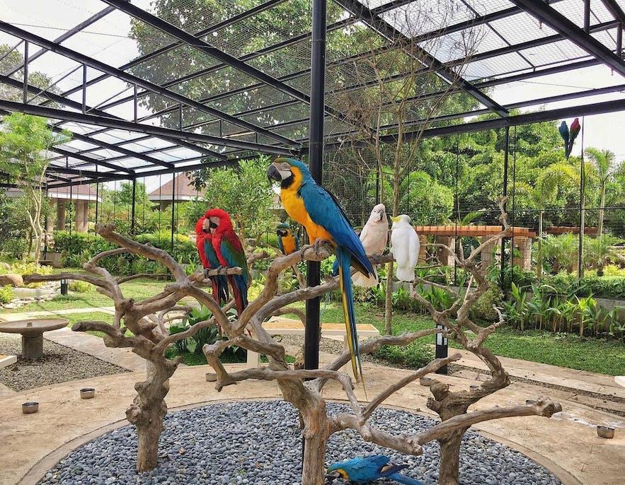 The aviary in Yoki's Farm