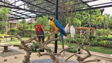The aviary in Yoki's Farm, Cavite.jpg