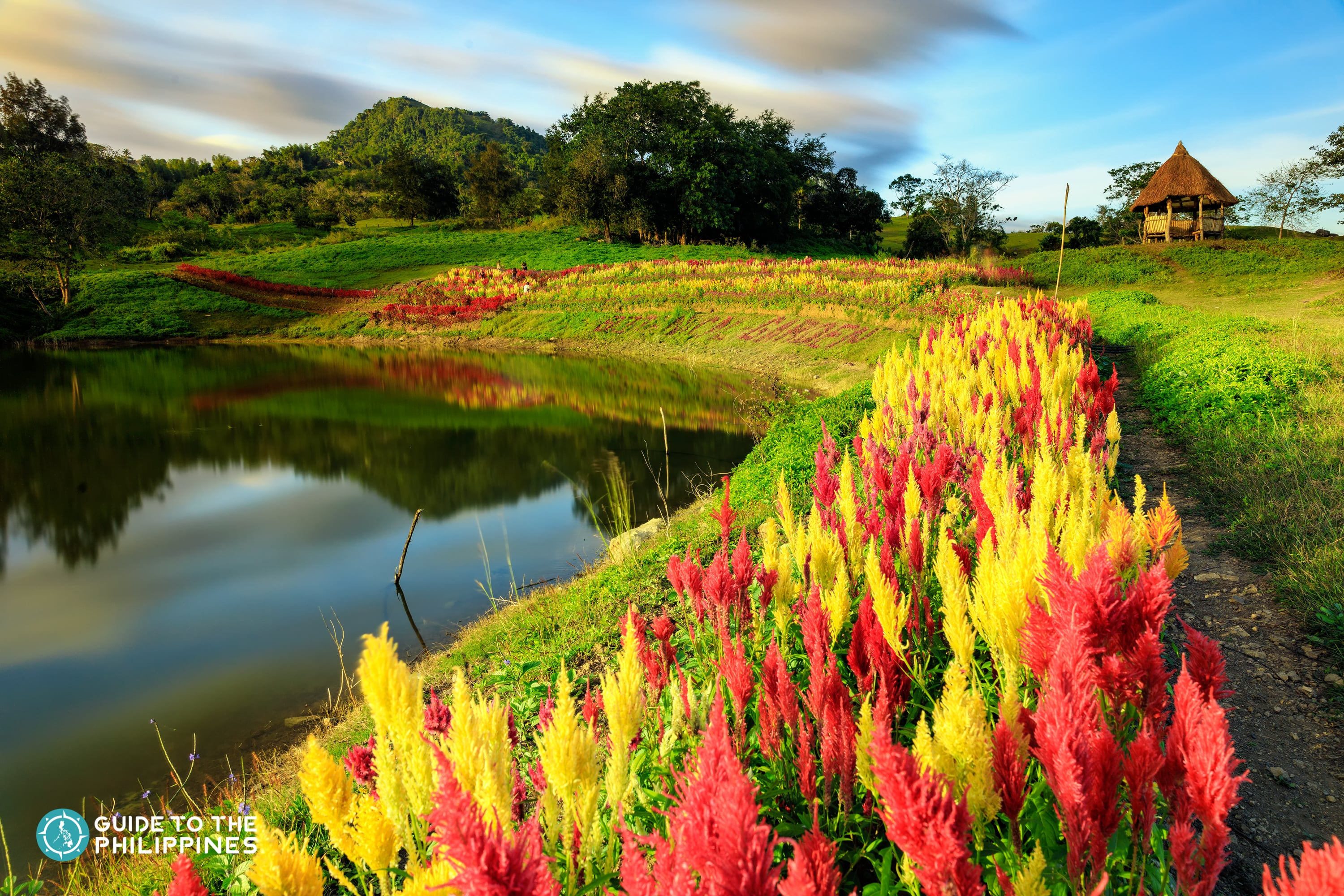 Colorful view of the Sirao Flower Farm in Cebu
