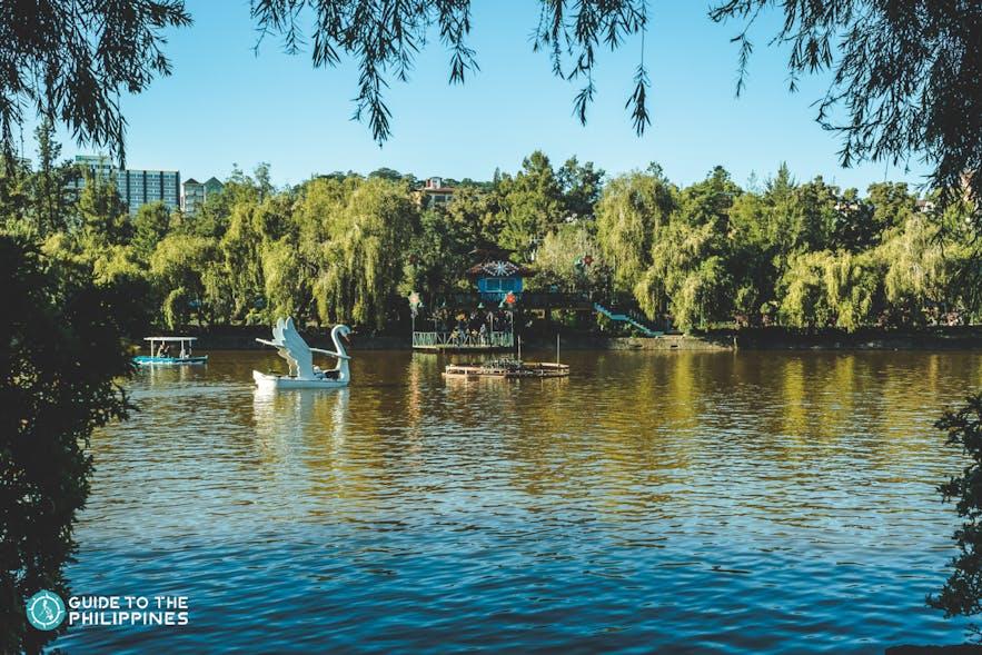Swan boats in Burnham Park, Baguio