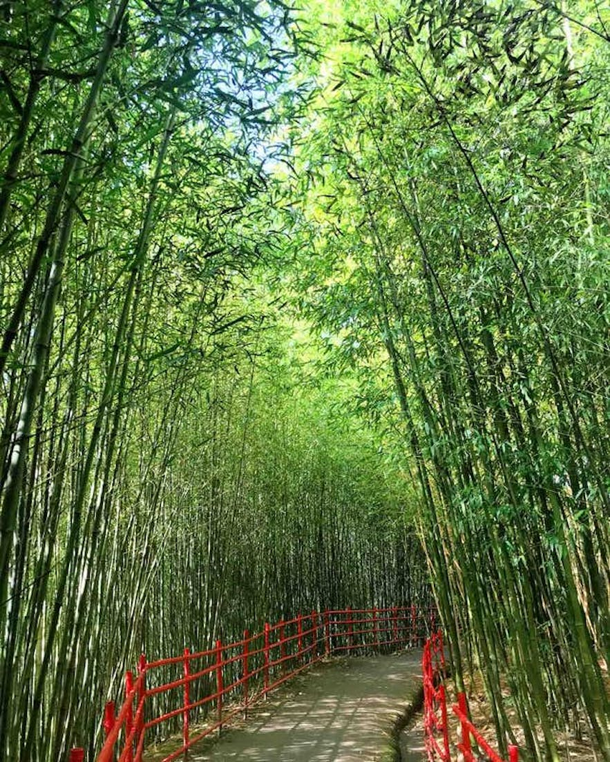 A walkway in the Bamboo Sanctuary in Baguio
