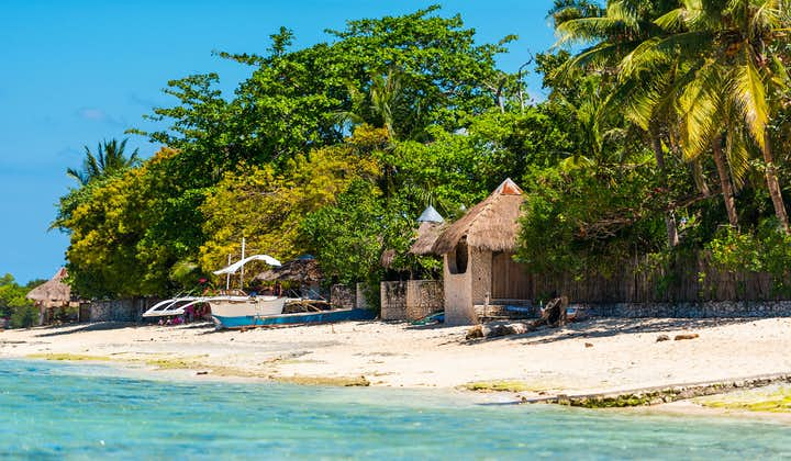 Enjoy the beach life with Oslob Cebu's Whale Shark Watching, Kawasan Falls and Moalboal Island Tour
