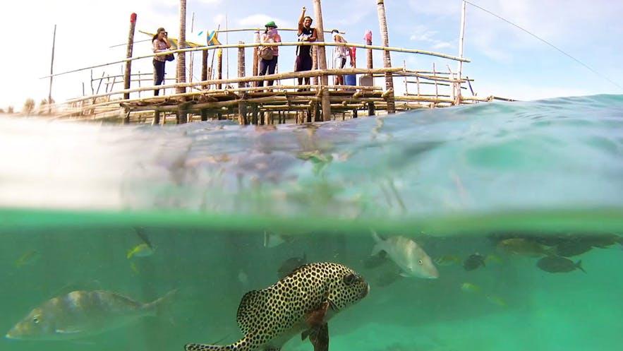 Staff feeding fish at the Juag Lagoon Marine Sanctuary