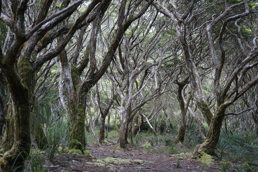 Mount Hamiguitan's hidden garden