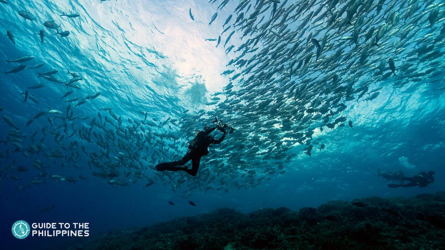 Diver swims by school of fish in Tubbataha Reef