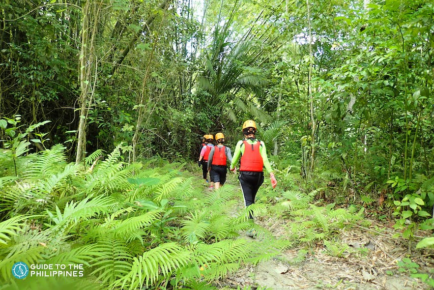 Tourists hiking in a tropical forest