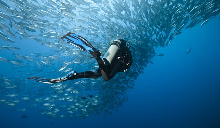 Scuba diving with marine animals in Boracay